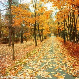 秋天悲凉的风景