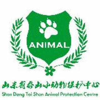 【山东省泰山小动物保护中心】在线收听_流浪狗狗的