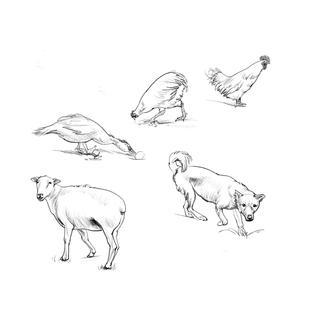 速写动物画法—《大师兄》3611
