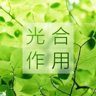 第34期-揭晓最爱球根排行(花花 A君)