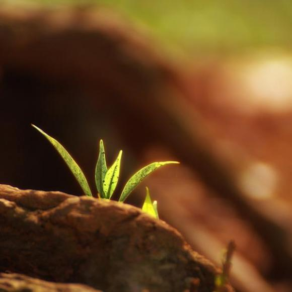 ppt 背景 壁纸 电脑桌面 发芽 绿色 绿色植物 嫩芽 嫩叶 新芽 植物 桌