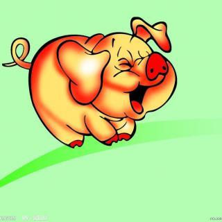 微信头像动物小猪