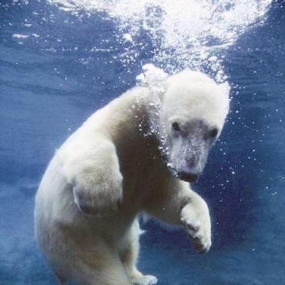 vol.11北极熊都是道貌岸然的资本家小太阳鹦鹉的v鹦鹉级别图片