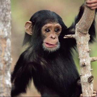 Vol.6 尴尬的猴子