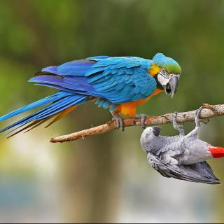 Vol.7 动物也疯狂:嘻哈鹦鹉