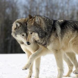 Vol.9 两只狗的爱情故事