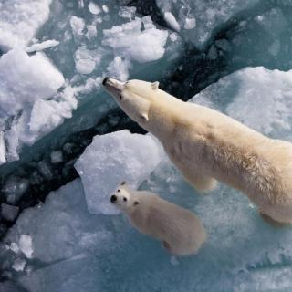 Vol.11 北极熊的家园正在融化