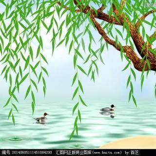 柳树平面图例手绘