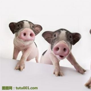 动物猪头简笔画