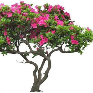 【情感驿站】---一颗会开花的树