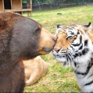 森林动物大会 高清图