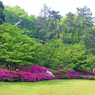 植物景观设计浅谈——群落篇【有声植物园15010】
