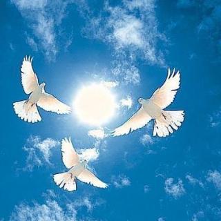 [为爱读书]永生的和平鸽