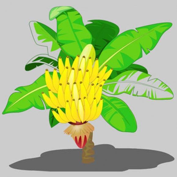 动物创意画香蕉
