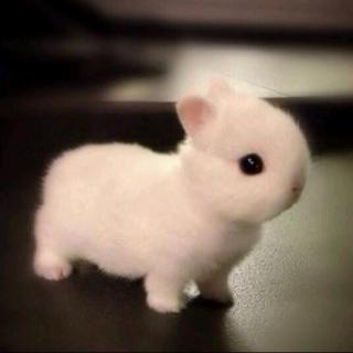 小兔子的玻璃心