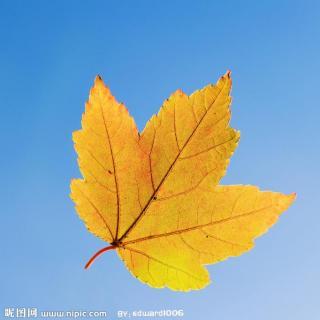 送别秋天树叶画