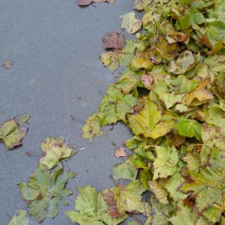 《流浪的叶子》文,碑林,路人