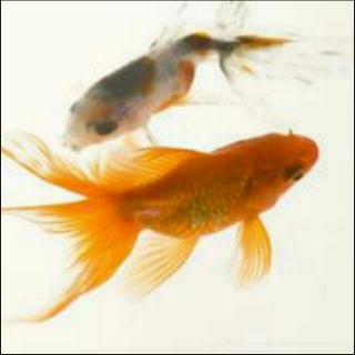 两条鱼的故事