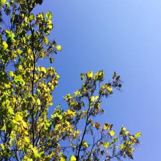 秋天把旧叶子揉掉了,你要听新故事吗