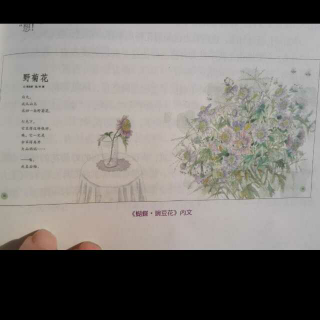 提问力,打开绘本之门(大猫)2~1野菊花