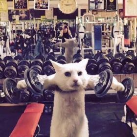 原来你健身什么都不想要