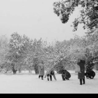 20151207134941《听,雪飘落的声音》作者:雪飘落的声音