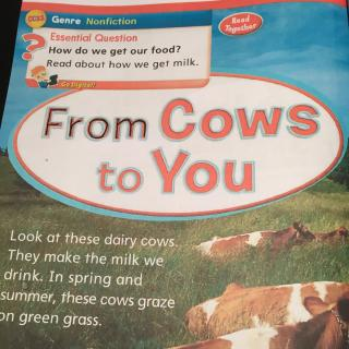 20151210_From Cows to You