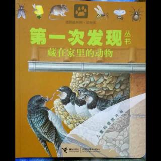 第一次发现丛书——藏在家里的动物