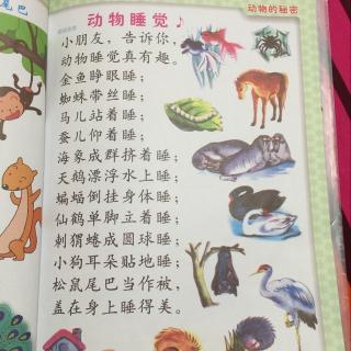 幼儿园中班 儿歌 动物睡觉