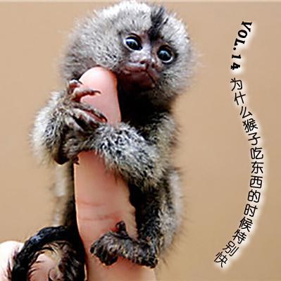 vol.14为什么猴子吃东西的时候特别快