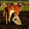 资本家宁愿把牛奶倒掉也不分给穷人喝,是因为坏吗