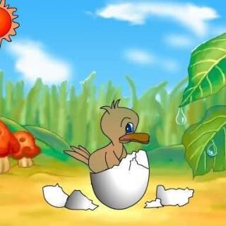 这群小鸭子都是粉黄色的颜色,生得都很可爱,农庄里的大家都很喜欢