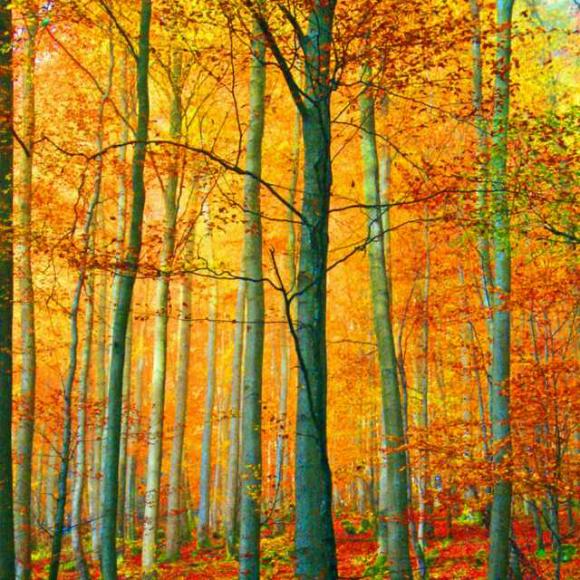 95 散文《秋天的树林》作者:张玉芸 朗读:萧晗
