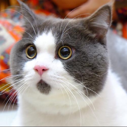 壁纸 动物 猫 猫咪 小猫 桌面 501_501