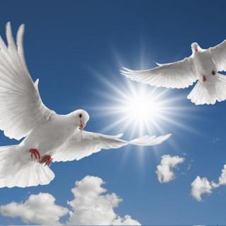 散文『永生的和平鸽』