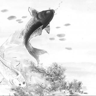 手绘黑白锦鲤