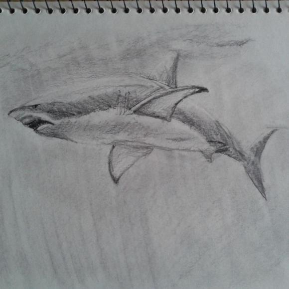 鲨鱼素描 图片素材