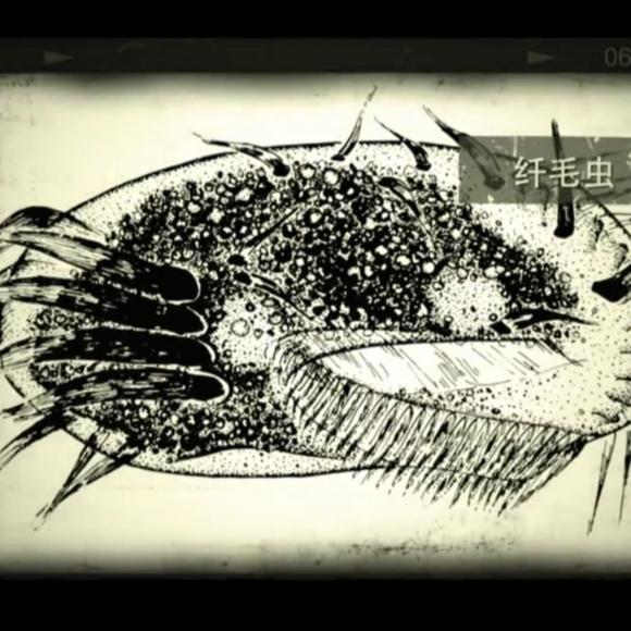 6678面孔|宋微波:原生动物学家 中科院院士