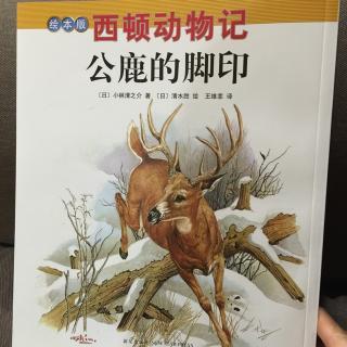 西顿动物记~公鹿的脚印