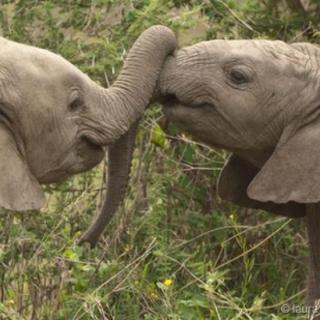 壁纸 大象 动物 320_320