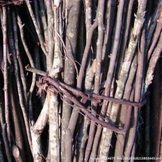 他把四个儿子都叫来,又把一捆扎得很紧的细树枝放在他们面前的地