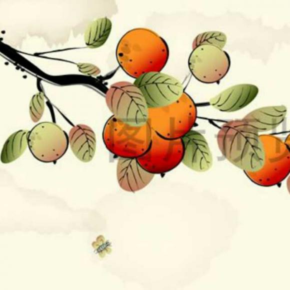 我亲爱的甜橙树简介_我亲爱的甜橙树(下)—缪晓俊