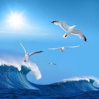 微信海鸥风景动态图片