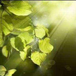 阳光绿叶微信头像