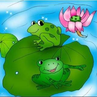 little frog 《小青蛙》