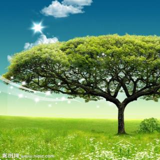 我常常站在人来人往的路边,仰望蓝天,   我知道,树的内心在渴望着一种