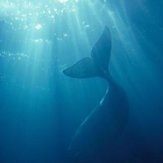 深海动物    素描画