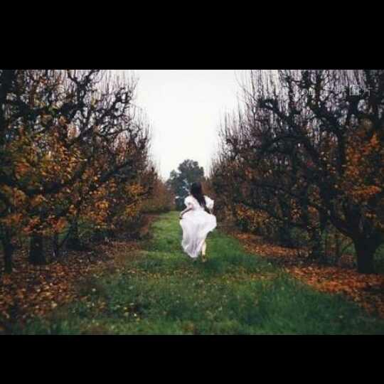 桃花树下古风背影手绘