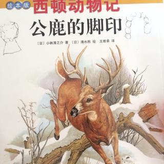西顿动物记《公鹿的脚印》