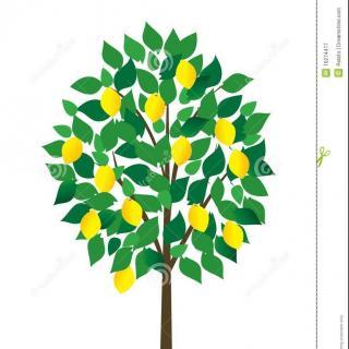 英语pk台:小清新歌曲《lemon tree》2